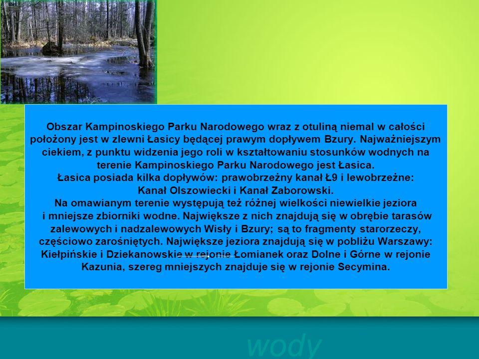 Obszar Kampinoskiego Parku Narodowego wraz z otuliną niemal w całości położony jest w zlewni Łasicy będącej prawym dopływem Bzury. Najważniejszym ciek