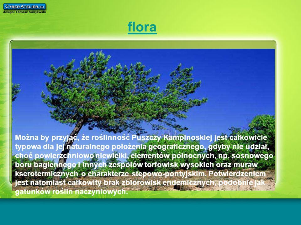 flora Można by przyjąć, że roślinność Puszczy Kampinoskiej jest całkowicie typowa dla jej naturalnego położenia geograficznego, gdyby nie udział, choć