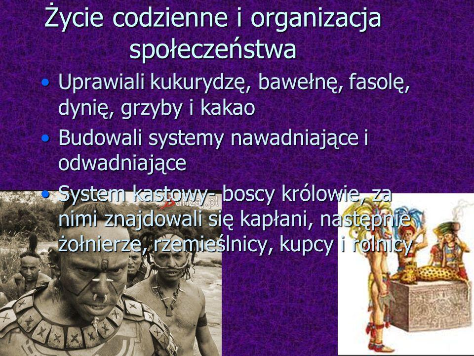 Życie codzienne i organizacja społeczeństwa Uprawiali kukurydzę, bawełnę, fasolę, dynię, grzyby i kakaoUprawiali kukurydzę, bawełnę, fasolę, dynię, gr