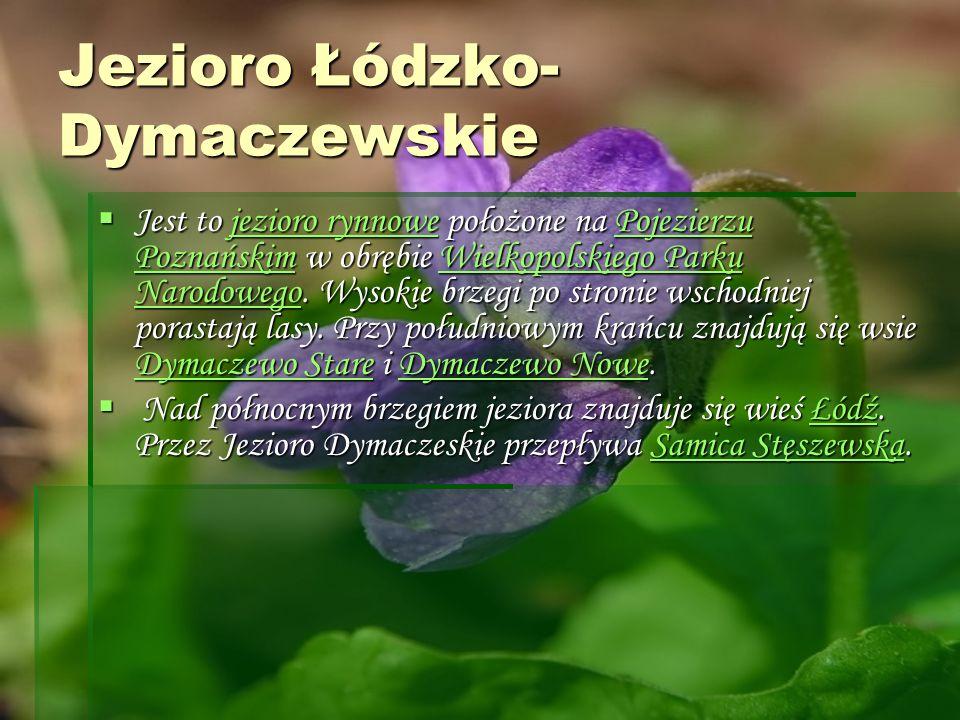 Jezioro Łódzko- Dymaczewskie Jest to jezioro rynnowe położone na Pojezierzu Poznańskim w obrębie Wielkopolskiego Parku Narodowego. Wysokie brzegi po s