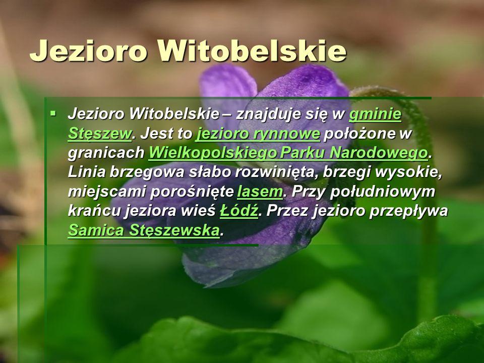 Jezioro Witobelskie Jezioro Witobelskie – znajduje się w gminie Stęszew. Jest to jezioro rynnowe położone w granicach Wielkopolskiego Parku Narodowego