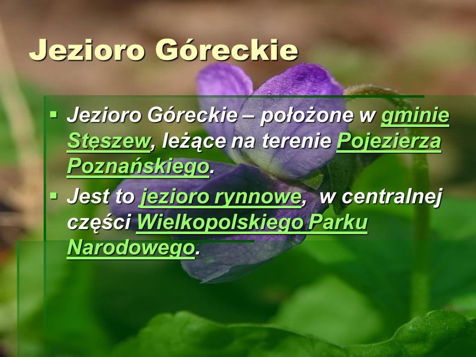 Jezioro Góreckie Jezioro Góreckie – położone w gminie Stęszew, leżące na terenie Pojezierza Poznańskiego. Jezioro Góreckie – położone w gminie Stęszew