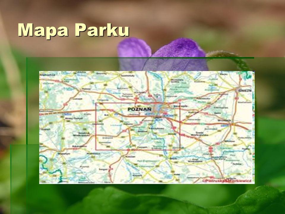 Położenie Parku Położenie Parku Wielkopolski Park Narodowy znajduje się w województwie wielkopolskim, w powiecie poznańskim, około 15 km na południe od Poznania.