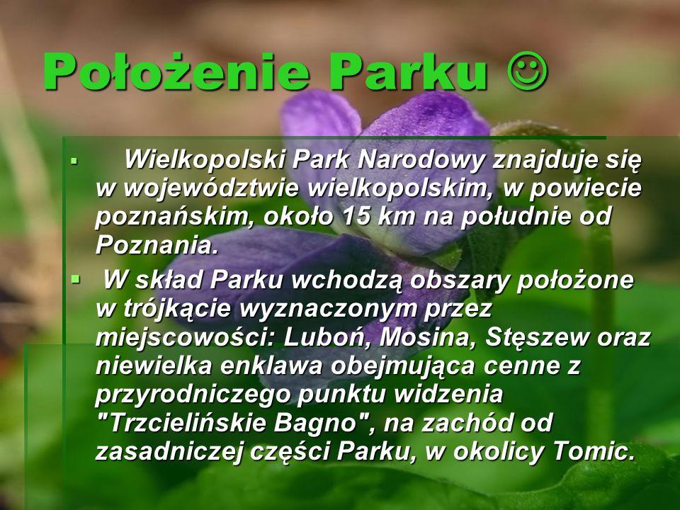 Położenie Parku Położenie Parku Wielkopolski Park Narodowy znajduje się w województwie wielkopolskim, w powiecie poznańskim, około 15 km na południe o