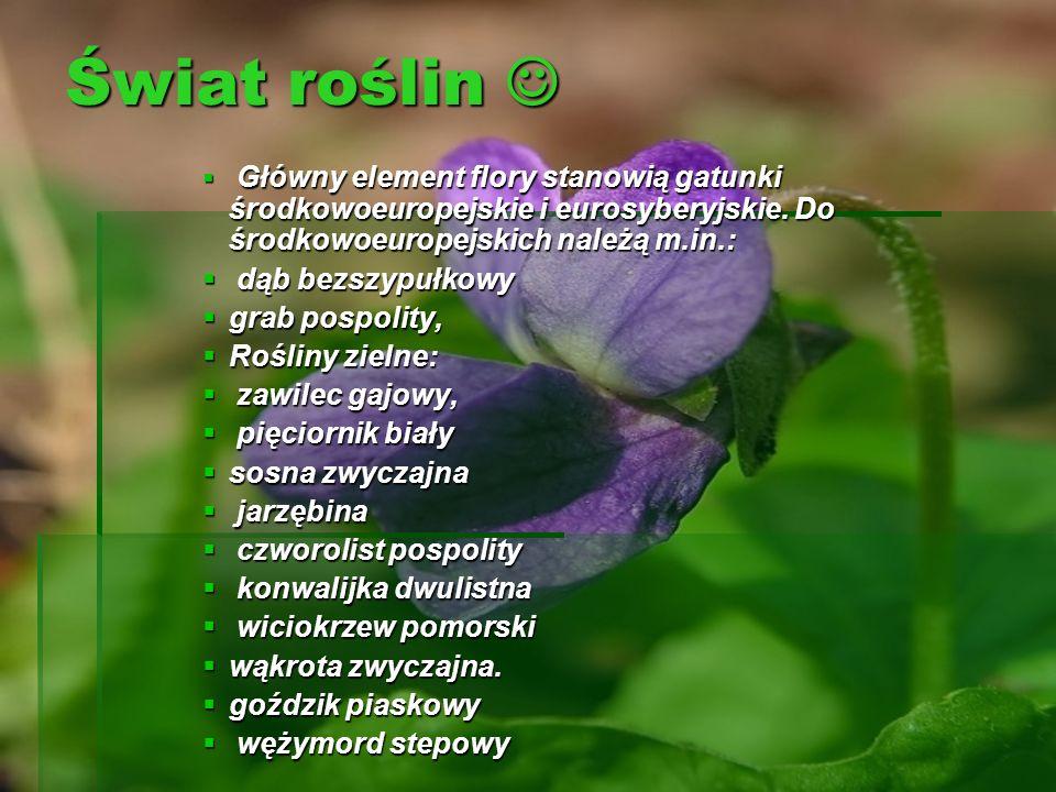 Świat roślin Świat roślin Główny element flory stanowią gatunki środkowoeuropejskie i eurosyberyjskie. Do środkowoeuropejskich należą m.in.: dąb bezsz