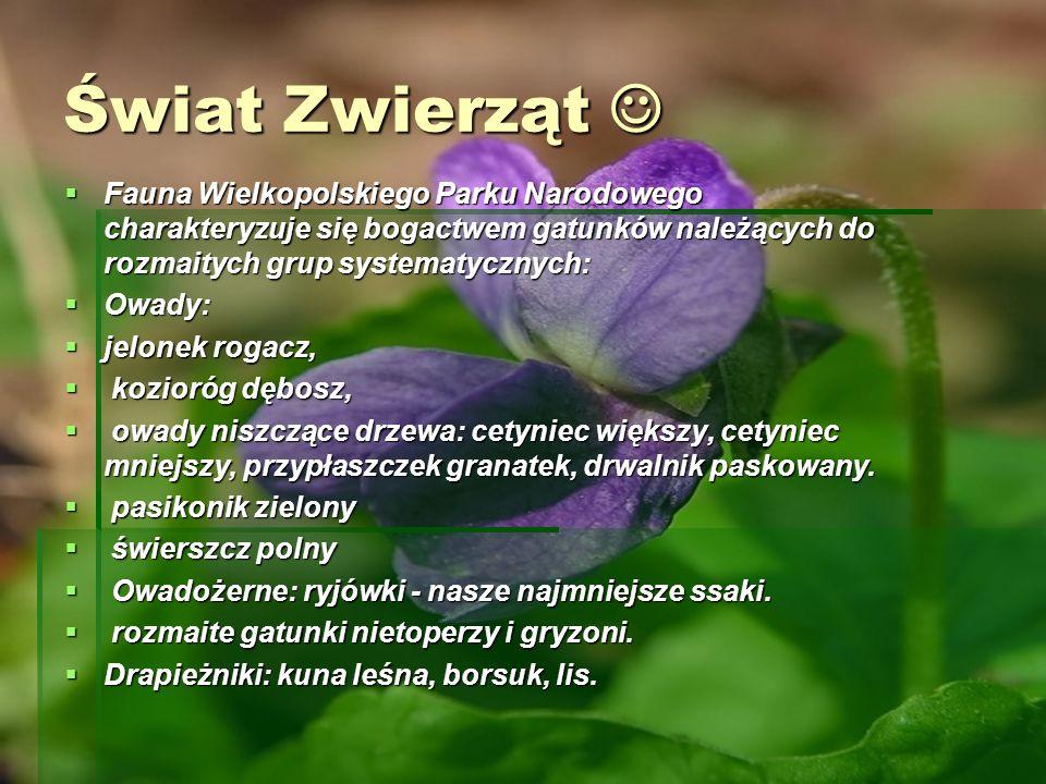 Świat Zwierząt Świat Zwierząt Fauna Wielkopolskiego Parku Narodowego charakteryzuje się bogactwem gatunków należących do rozmaitych grup systematyczny