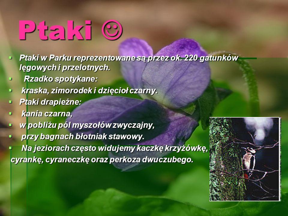 Jelonek Rogacz Jelonek Rogacz Jeden z największych chrząszczy w Polsce, należy do rodziny jelonkowatych.chrząszczy jelonkowatych Jest barwy ciemnobrązowej.