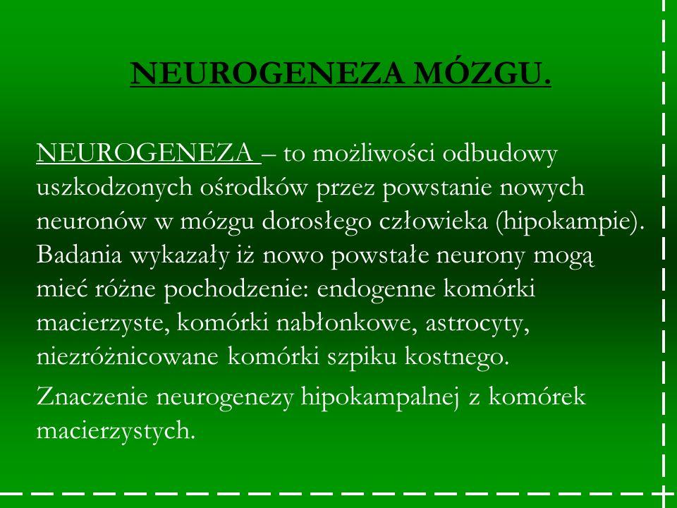 NEUROGENEZA – to możliwości odbudowy uszkodzonych ośrodków przez powstanie nowych neuronów w mózgu dorosłego człowieka (hipokampie). Badania wykazały