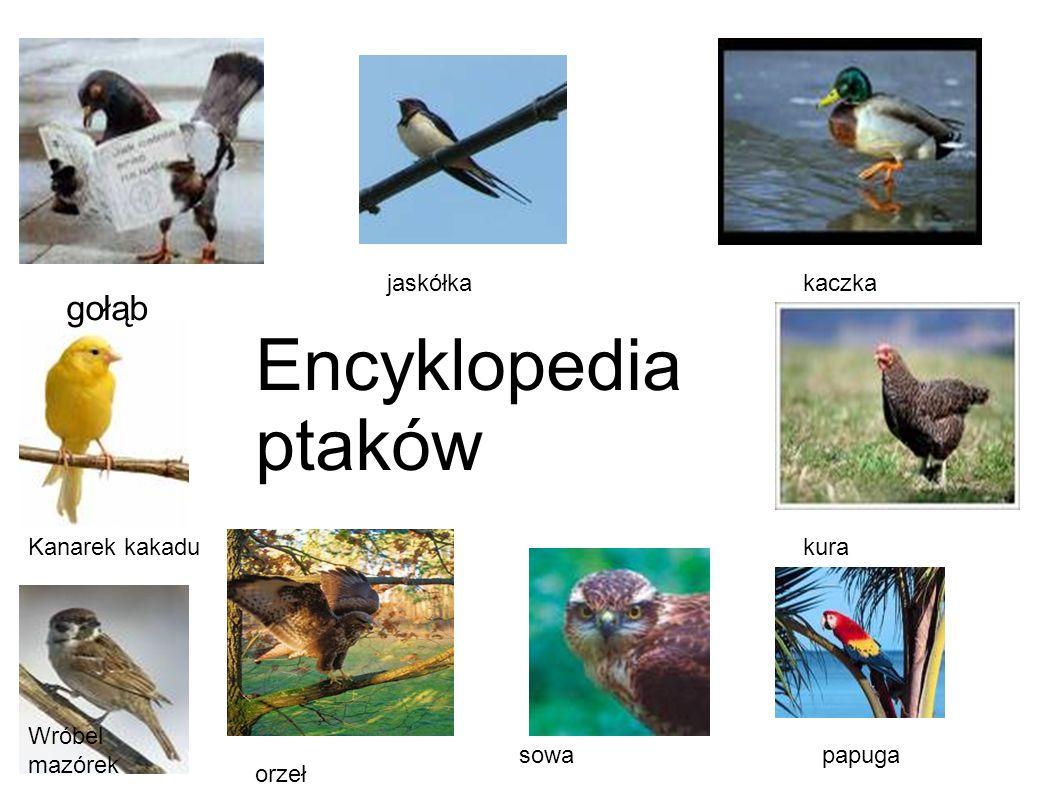 gołąb jaskółkakaczka Kanarek kakadu papuga orzeł kura sowa Wróbel mazórek Encyklopedia ptaków