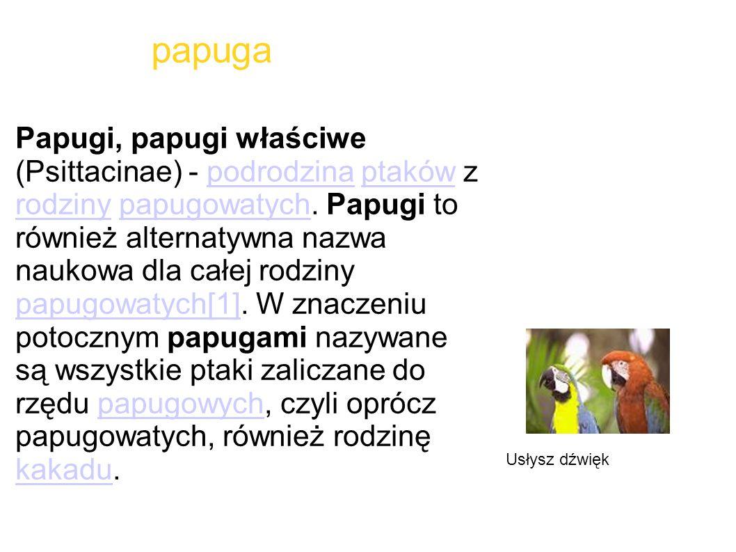 papuga Papugi, papugi właściwe (Psittacinae) - podrodzina ptaków z rodziny papugowatych. Papugi to również alternatywna nazwa naukowa dla całej rodzin