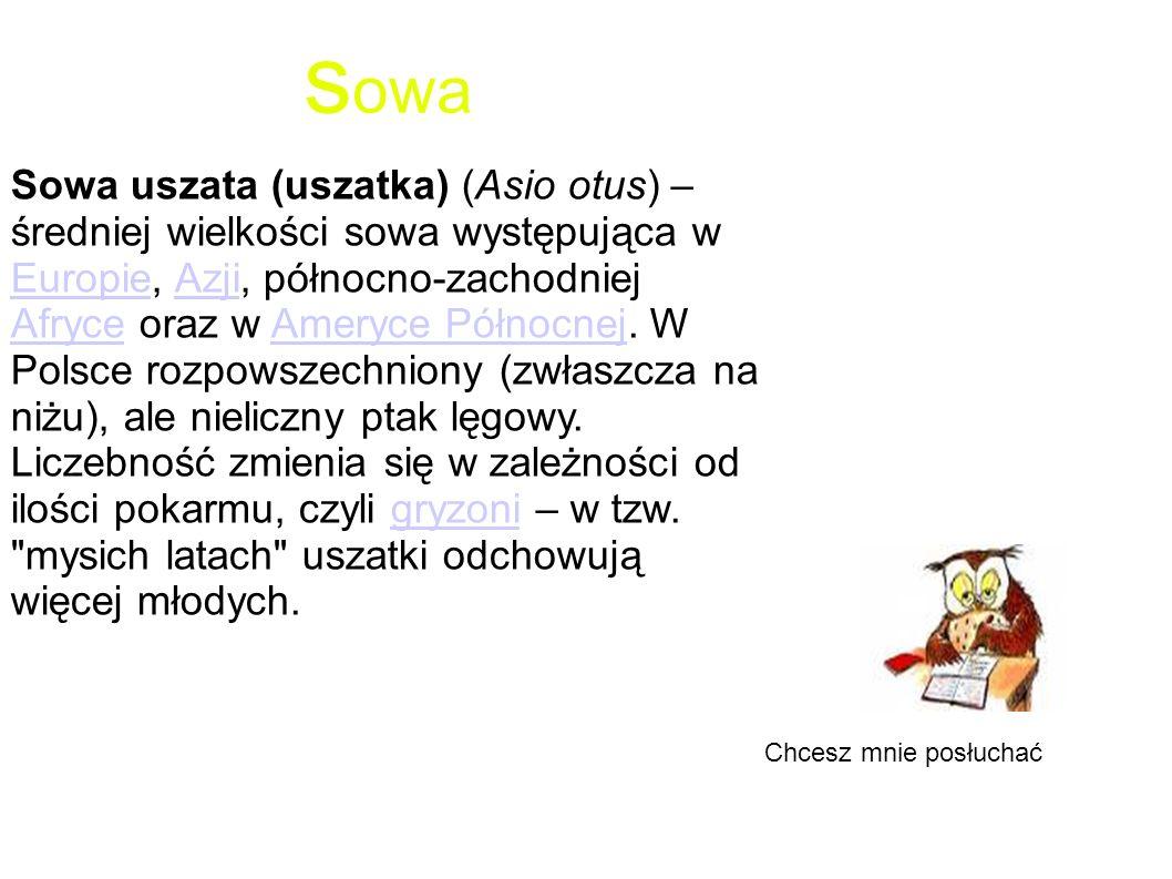 s owa Sowa uszata (uszatka) (Asio otus) – średniej wielkości sowa występująca w Europie, Azji, północno-zachodniej Afryce oraz w Ameryce Północnej. W