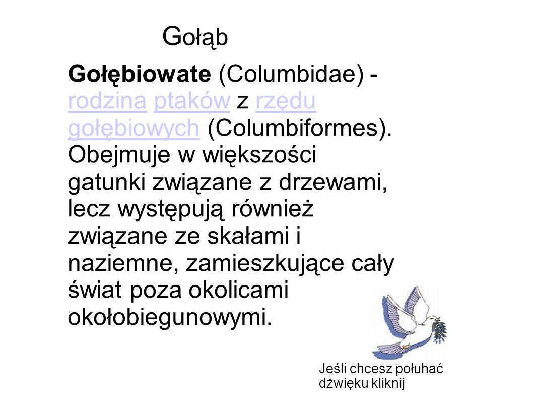 Gołębiowate (Columbidae) - rodzina ptaków z rzędu gołębiowych (Columbiformes). Obejmuje w większości gatunki związane z drzewami, lecz występują równi
