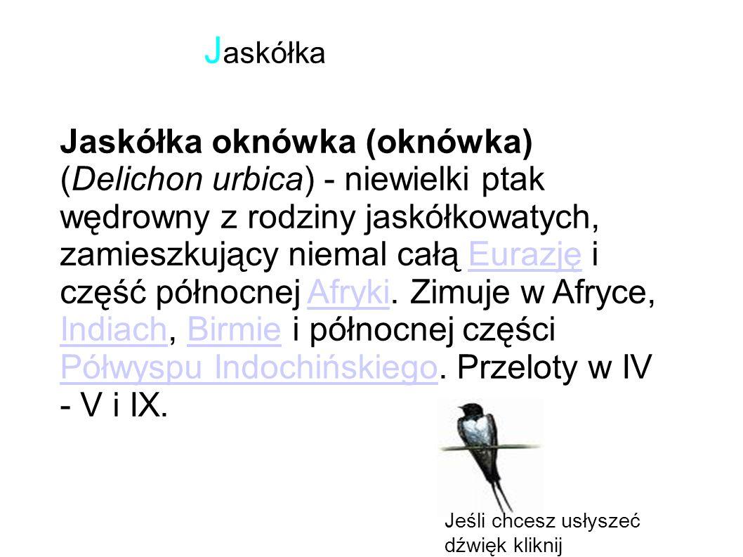 Jaskółka oknówka (oknówka) (Delichon urbica) - niewielki ptak wędrowny z rodziny jaskółkowatych, zamieszkujący niemal całą Eurazję i część północnej Afryki.