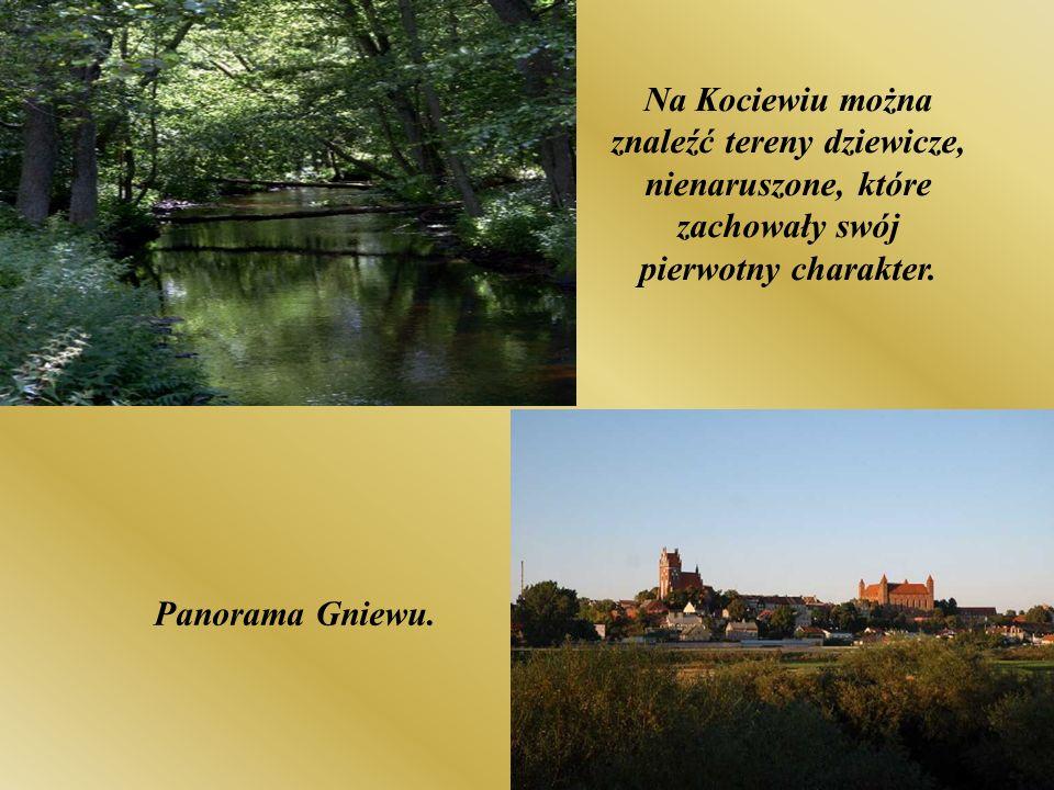 Panorama Gniewu. Na Kociewiu można znaleźć tereny dziewicze, nienaruszone, które zachowały swój pierwotny charakter.