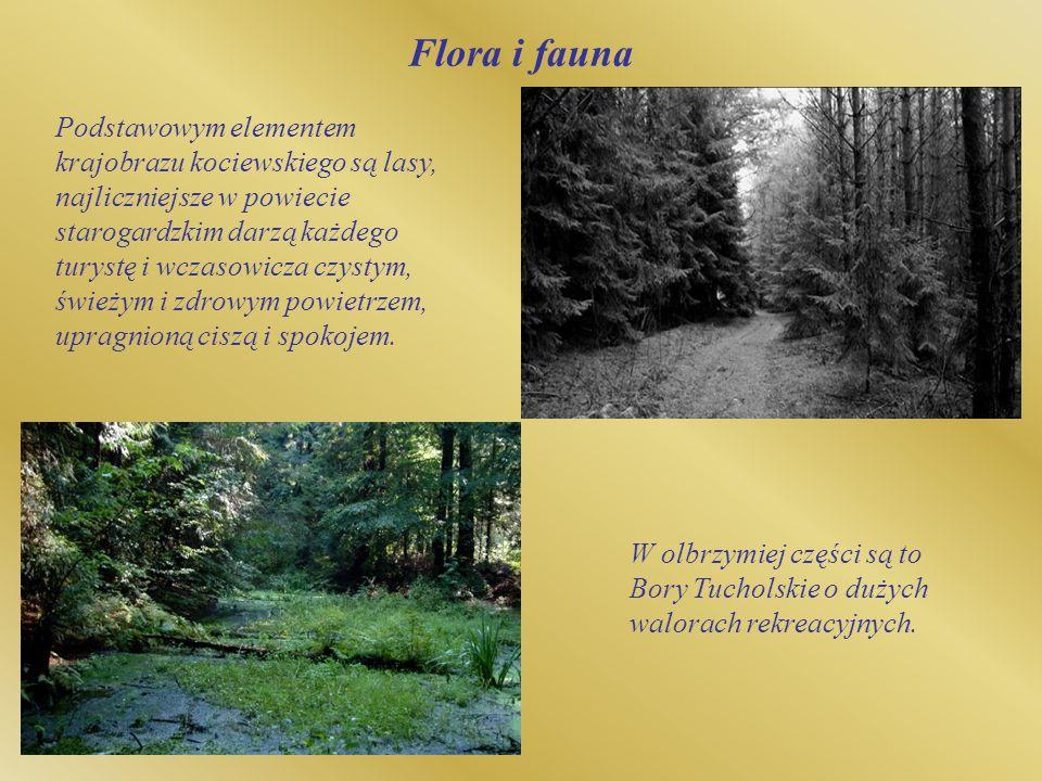 Flora i fauna Podstawowym elementem krajobrazu kociewskiego są lasy, najliczniejsze w powiecie starogardzkim darzą każdego turystę i wczasowicza czyst