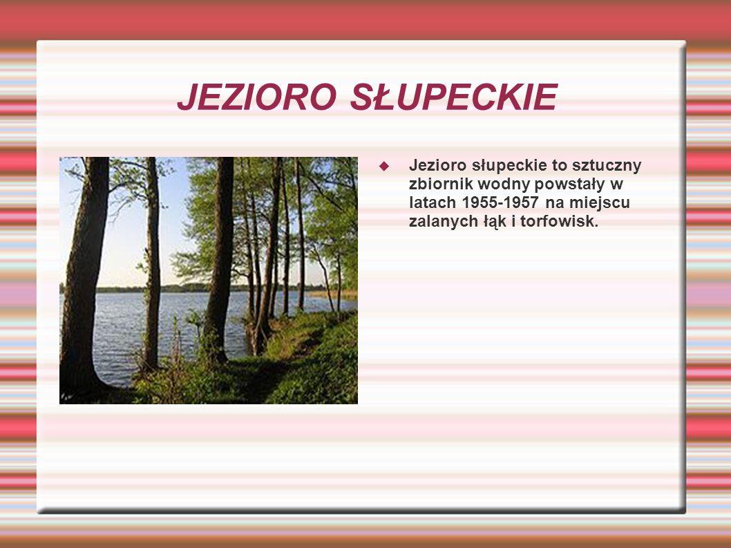 JEZIORO SŁUPECKIE Jezioro słupeckie to sztuczny zbiornik wodny powstały w latach 1955-1957 na miejscu zalanych łąk i torfowisk.