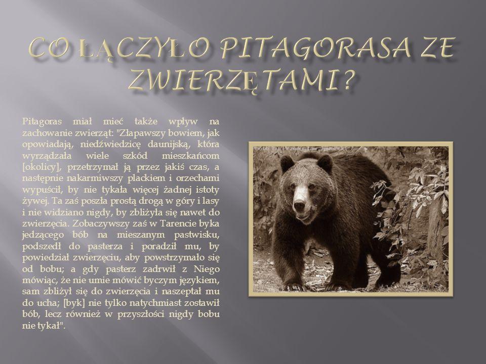 Pitagoras miał mieć także wpływ na zachowanie zwierząt: