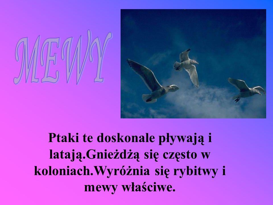 Ptaki te doskonale pływają i latają.Gnieżdżą się często w koloniach.Wyróżnia się rybitwy i mewy właściwe.