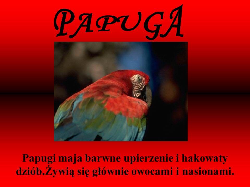Papugi maja barwne upierzenie i hakowaty dziób.Żywią się głównie owocami i nasionami.