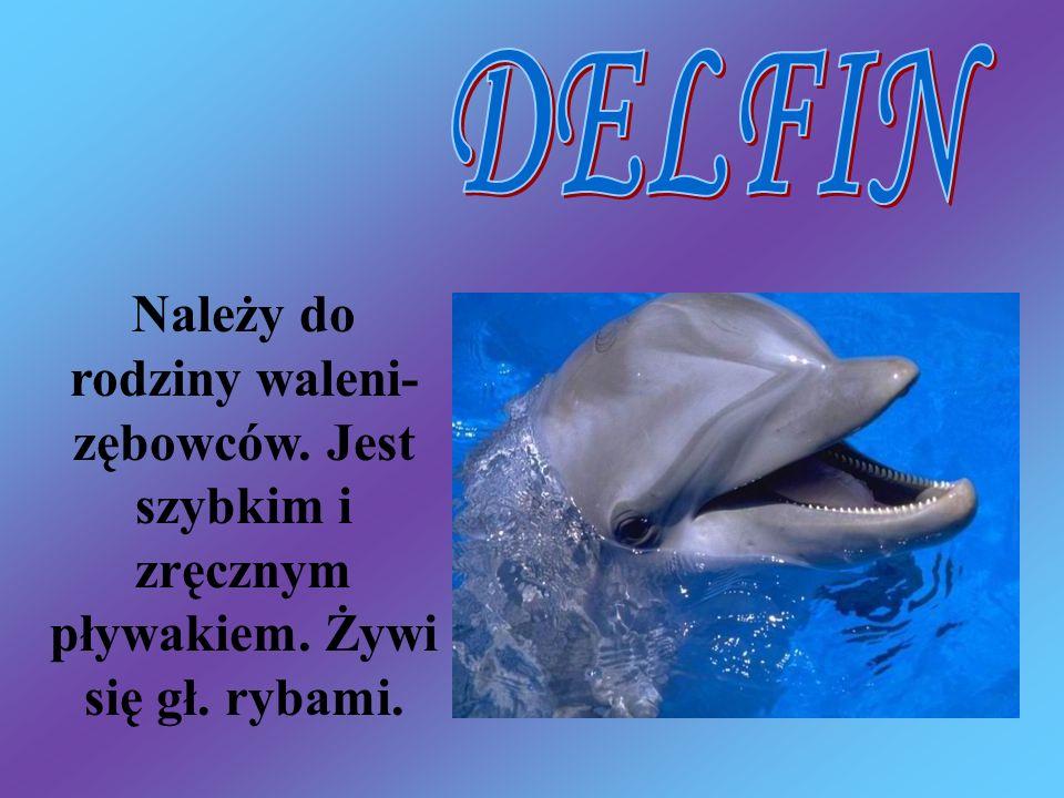 Należy do rodziny waleni- zębowców. Jest szybkim i zręcznym pływakiem. Żywi się gł. rybami.