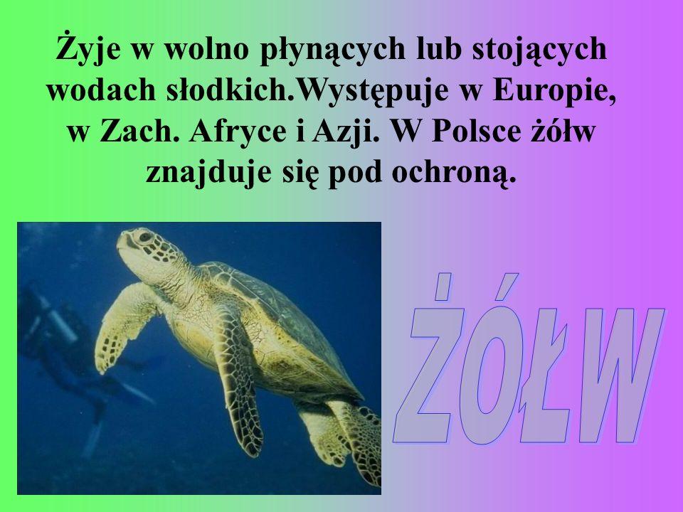 Żyje w wolno płynących lub stojących wodach słodkich.Występuje w Europie, w Zach. Afryce i Azji. W Polsce żółw znajduje się pod ochroną.