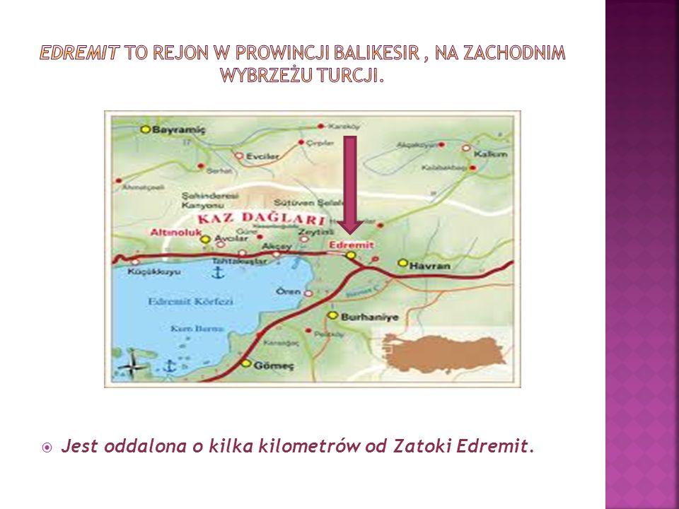 W górach Kaz występuje wiele sosen i drzew oliwnych.