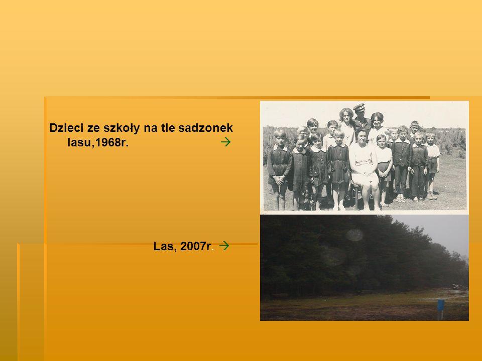 Dzieci ze szkoły na tle sadzonek lasu,1968r. Las, 2007r.