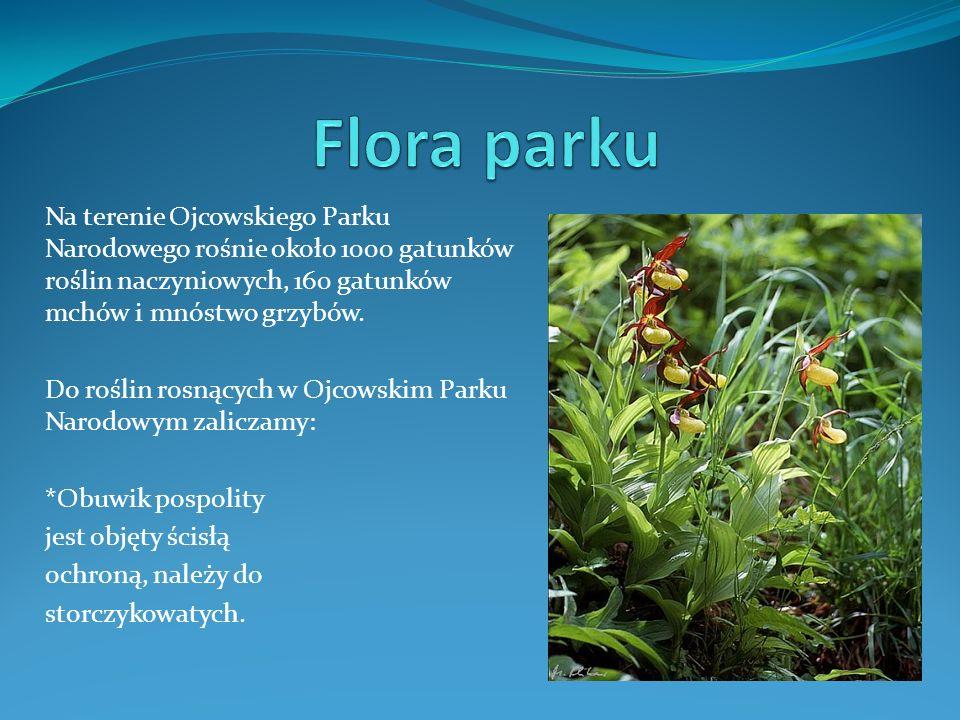 Na terenie Ojcowskiego Parku Narodowego rośnie około 1000 gatunków roślin naczyniowych, 160 gatunków mchów i mnóstwo grzybów. Do roślin rosnących w Oj