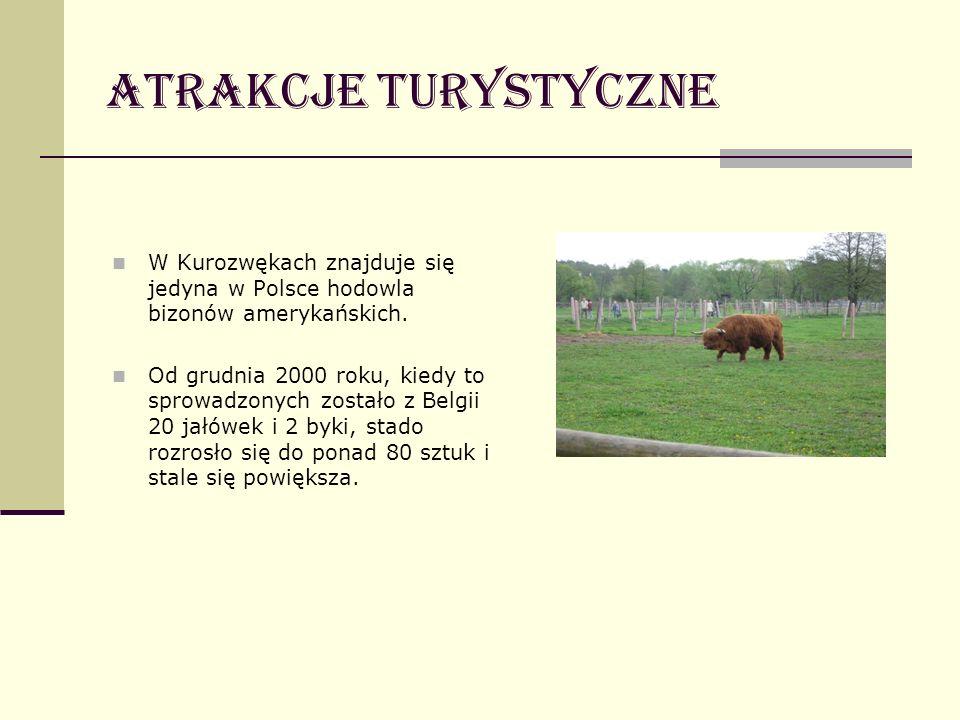 Atrakcje turystyczne W Kurozwękach znajduje się jedyna w Polsce hodowla bizonów amerykańskich. Od grudnia 2000 roku, kiedy to sprowadzonych zostało z