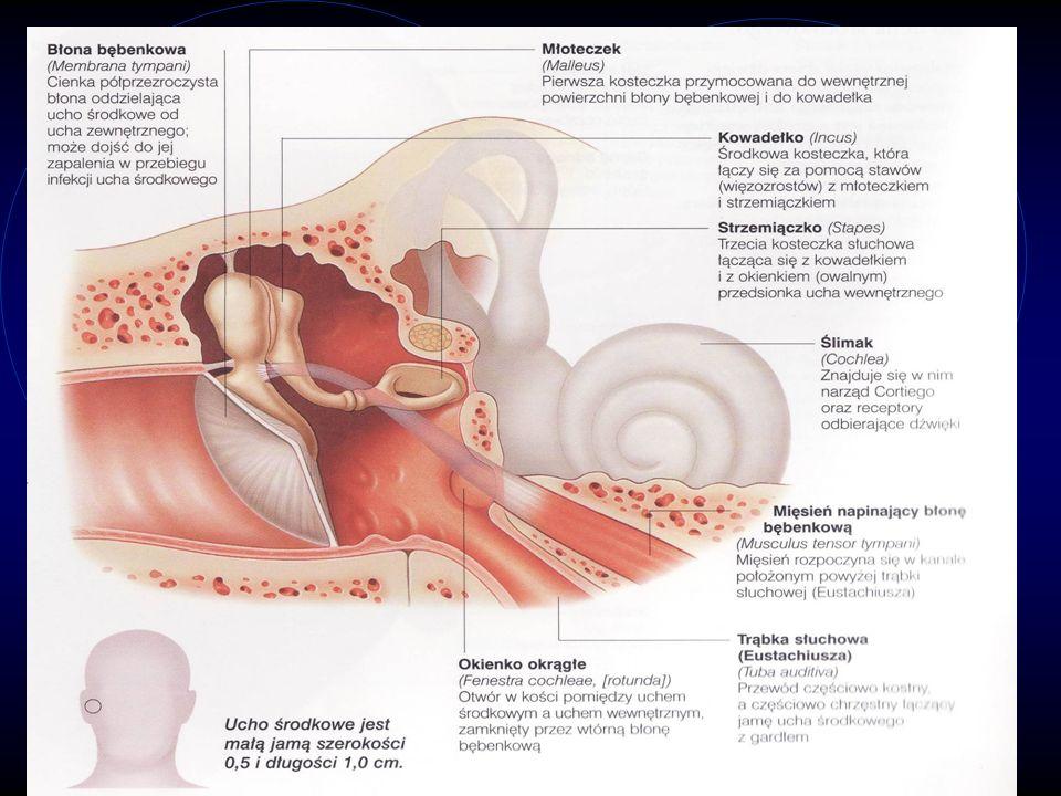 Ucho środkowe jest jamą wypełnioną powietrzem, w której znajduje się błona bębenkowa i trzy małe kosteczki. Kosteczki te pomagają przenosić dźwięki do