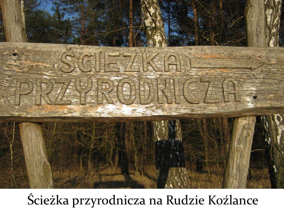 Ścieżka przyrodnicza na Rudzie Koźlance
