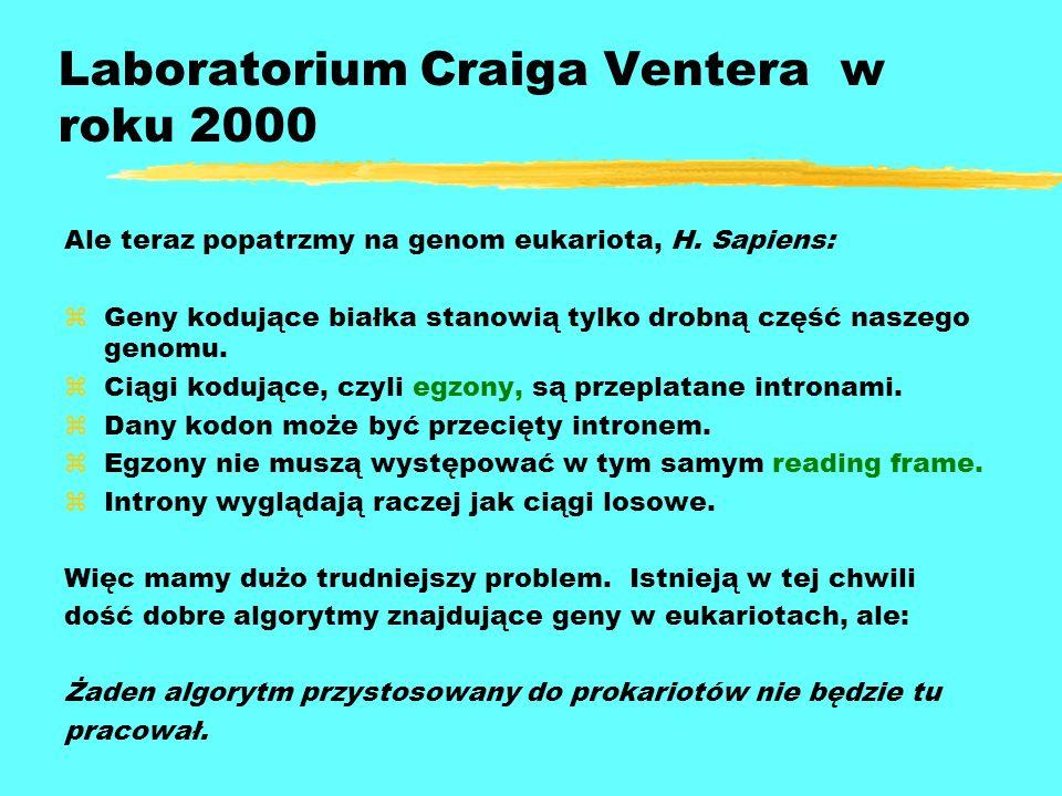 Laboratorium Craiga Ventera w roku 2000 Ale teraz popatrzmy na genom eukariota, H. Sapiens: zGeny kodujące białka stanowią tylko drobną część naszego
