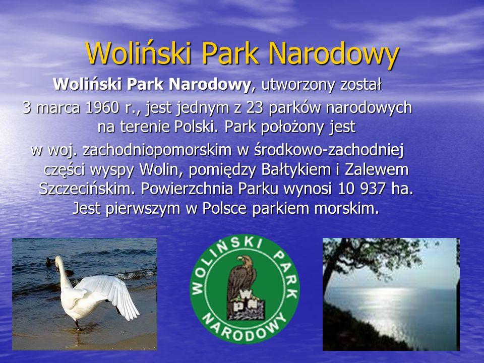 Woliński Park Narodowy Woliński Park Narodowy, utworzony został 3 marca 1960 r., jest jednym z 23 parków narodowych na terenie Polski. Park położony j