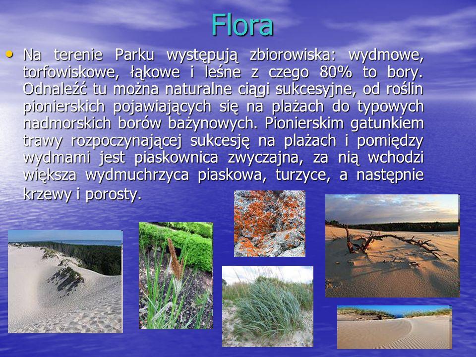 Flora Flora Na terenie Parku występują zbiorowiska: wydmowe, torfowiskowe, łąkowe i leśne z czego 80% to bory. Odnaleźć tu można naturalne ciągi sukce