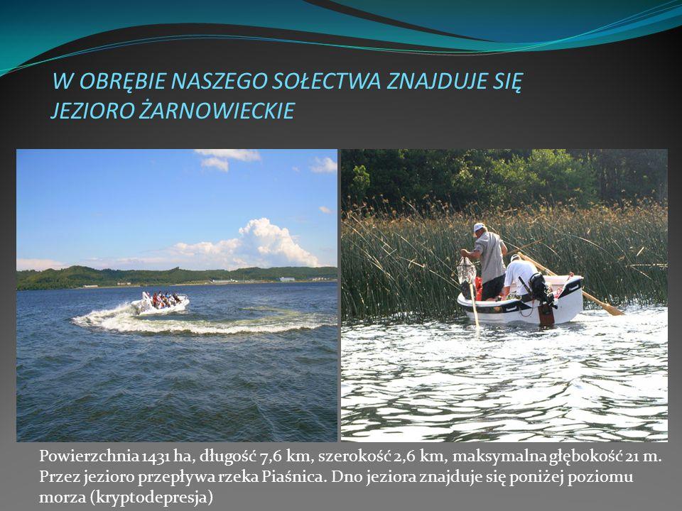 W OBRĘBIE NASZEGO SOŁECTWA ZNAJDUJE SIĘ JEZIORO ŻARNOWIECKIE Powierzchnia 1431 ha, długość 7,6 km, szerokość 2,6 km, maksymalna głębokość 21 m. Przez
