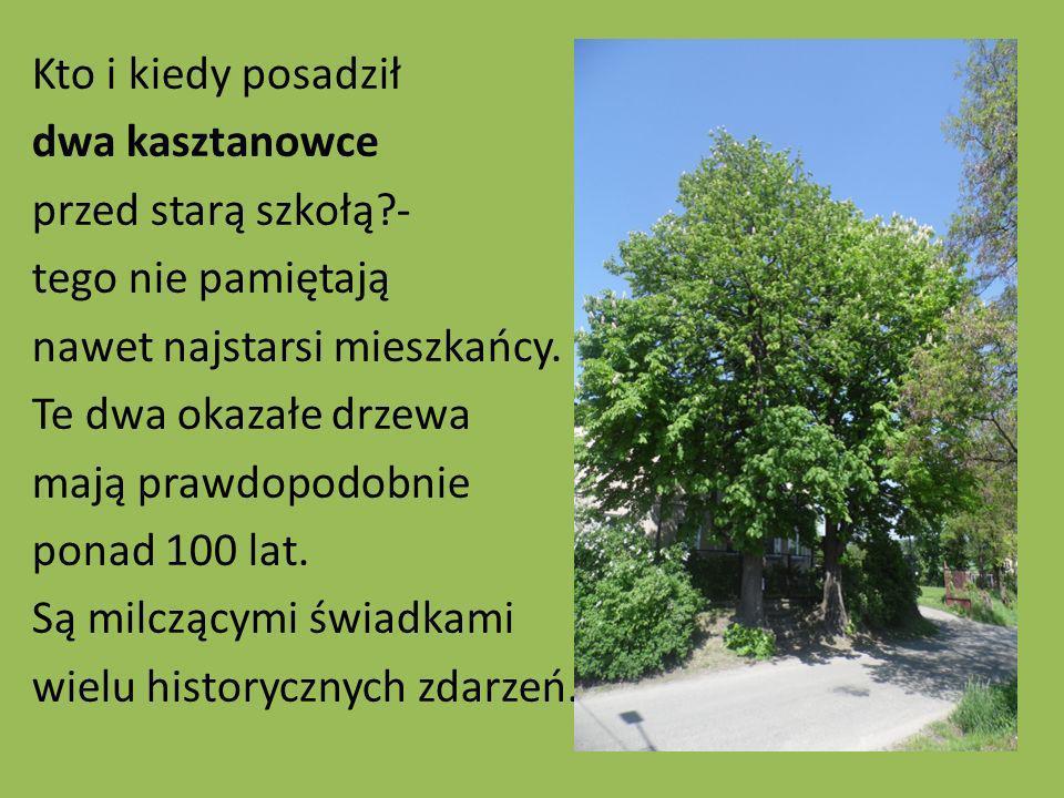 Kto i kiedy posadził dwa kasztanowce przed starą szkołą?- tego nie pamiętają nawet najstarsi mieszkańcy. Te dwa okazałe drzewa mają prawdopodobnie pon