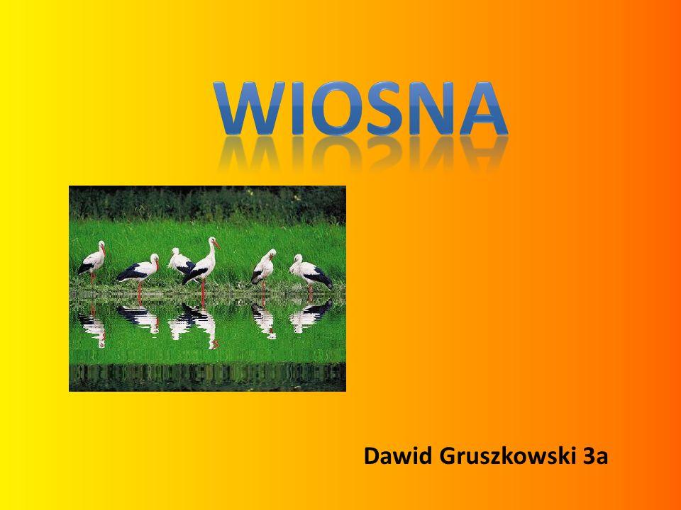 Dawid Gruszkowski 3a