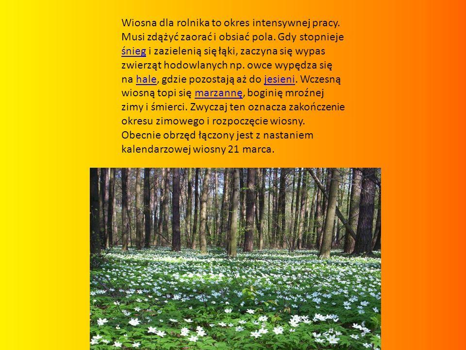 Krokus wiosenny Crocus vernus grupa roślin: CebuloweCebulowe podgrupa roślin: ozdobne kwiaty, kwitnące wiosną, na skalniaki Charakterystyka roślinyozdobne kwiatykwitnące wiosną na skalniaki pokrój: wzniesiony wysokość: 0,05-0,20 m dekoracyjność: kwiaty kolor kwiatów: białe, fioletowe, liliowe, żółte okres kwitnienia: II, III, IV gleba: próchniczna, przepuszczalna odczyn gleby: lekko kwaśna stanowisko: półcień, słońce zastosowanie: pojemniki, rabaty, skalniaki, w grupie