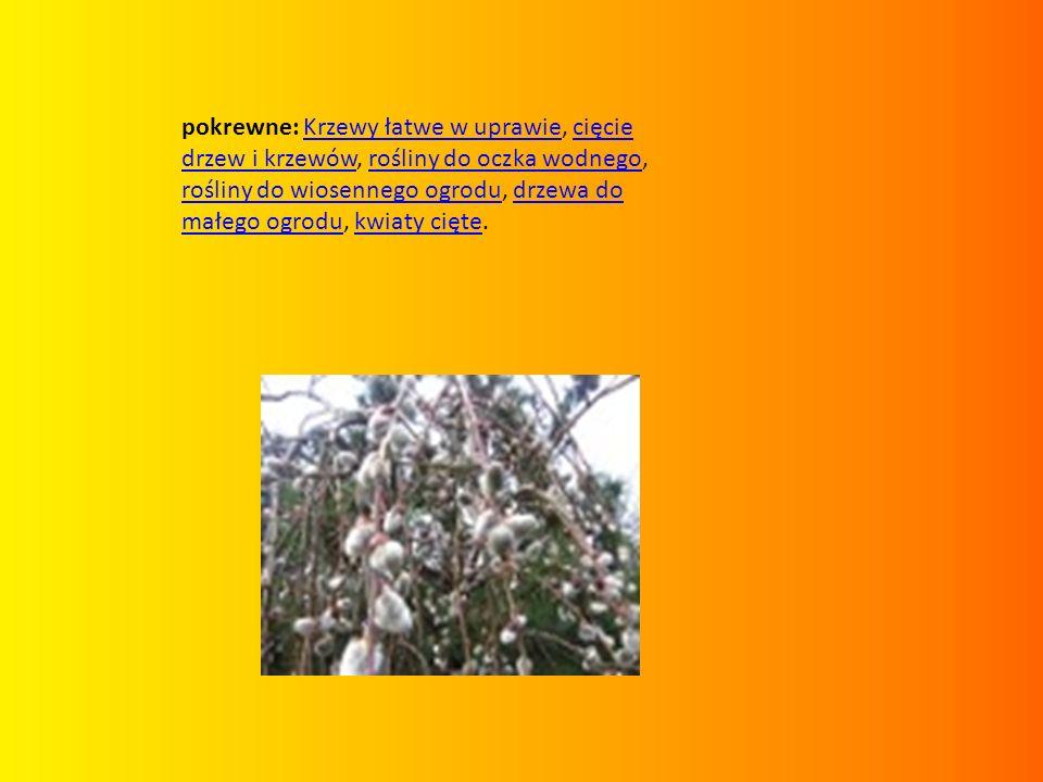 pokrewne: Krzewy łatwe w uprawie, cięcie drzew i krzewów, rośliny do oczka wodnego, rośliny do wiosennego ogrodu, drzewa do małego ogrodu, kwiaty cięt