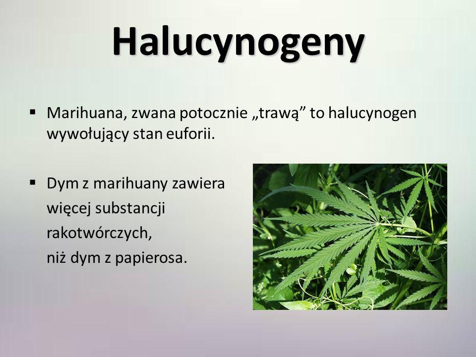 Halucynogeny Marihuana, zwana potocznie trawą to halucynogen wywołujący stan euforii. Dym z marihuany zawiera więcej substancji rakotwórczych, niż dym