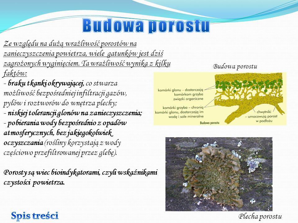 Na starych drzewach możemy spotkać duże skupiska porostów listkowatych, co świadczy o poprawieniu się stanu powietrza w Tarnobrzegu.