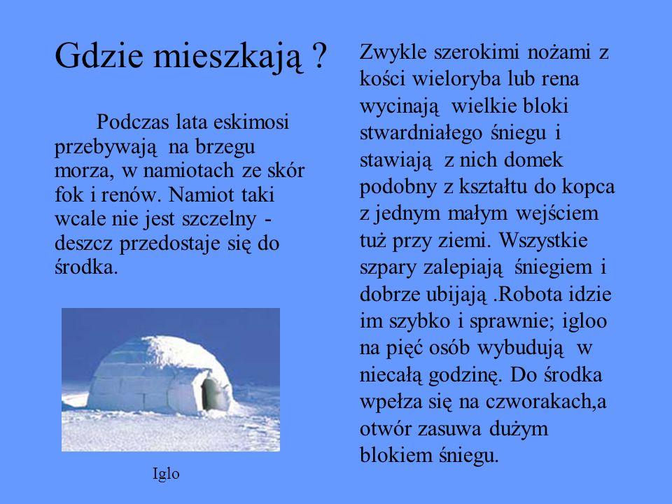 Eskimoska kobieta Spodnie eskimosów są szyte z futra białego niedźwiedzia, bluza ze skóry foki, a buty z miękkiej skóry młodego rena. Ubrania