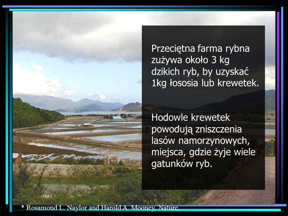 Przeciętna farma rybna zużywa około 3 kg dzikich ryb, by uzyskać 1kg łososia lub krewetek. Hodowle krewetek powodują zniszczenia lasów namorzynowych,