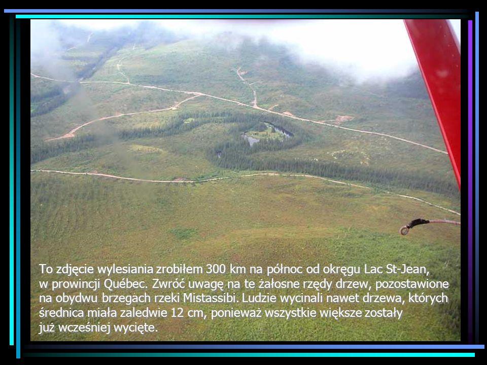 Czy jesteśmy lepsi? - 9 Ludność Rapa Nui osuszyła strumienie i zbiorniki wody pitnej.