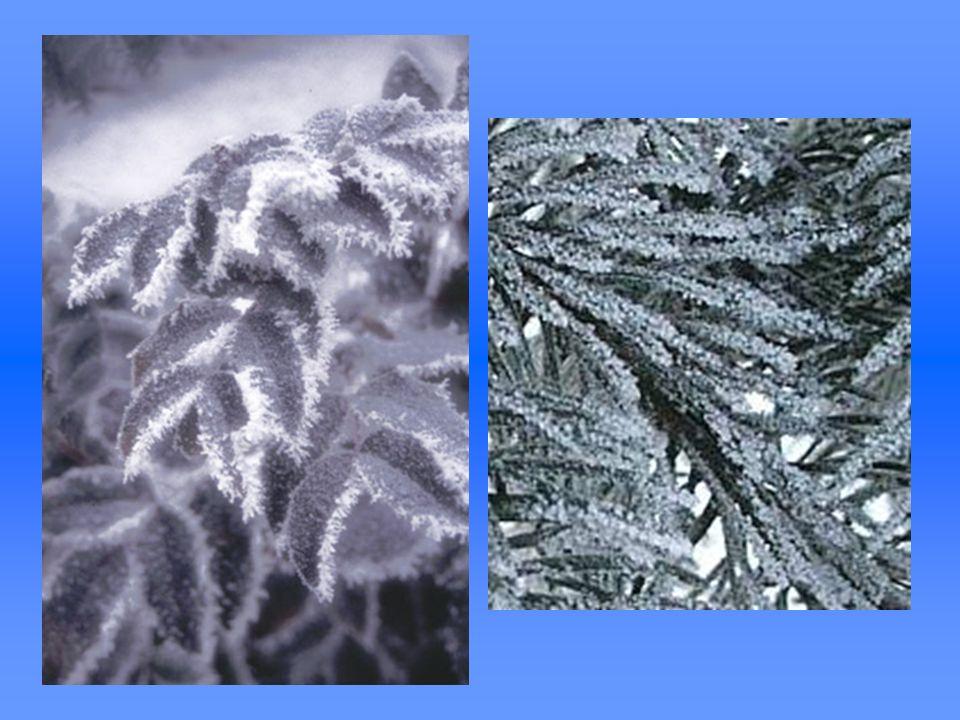 Szadź (też: sadź) - osad lodu powstający przy zamarzaniu małych, przechłodzonych kropelek wody (mgły lub chmury) w momencie zetknięcia kropelki z powierzchnią przedmiotu lub już narosłej szadzi.