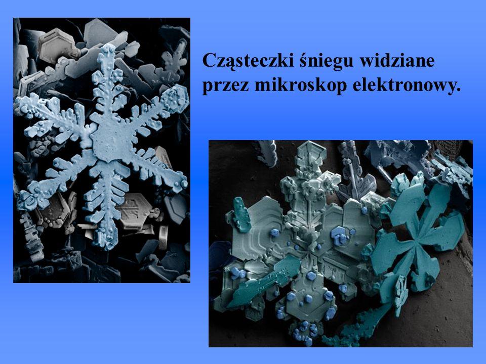 Cząsteczki śniegu widziane przez mikroskop elektronowy.