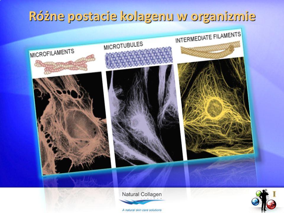 Różne postacie kolagenu w organizmie
