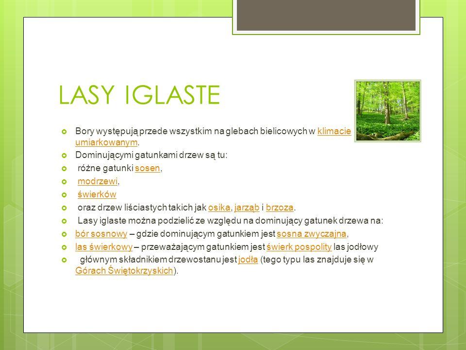 LASY IGLASTE Bory występują przede wszystkim na glebach bielicowych w klimacie umiarkowanym.klimacie umiarkowanym Dominującymi gatunkami drzew są tu: różne gatunki sosen,sosen modrzewi,modrzewi świerków oraz drzew liściastych takich jak osika, jarząb i brzoza.osikajarząbbrzoza Lasy iglaste można podzielić ze względu na dominujący gatunek drzewa na: bór sosnowy – gdzie dominującym gatunkiem jest sosna zwyczajna, bór sosnowysosna zwyczajna las świerkowy – przeważającym gatunkiem jest świerk pospolity las jodłowy las świerkowyświerk pospolity głównym składnikiem drzewostanu jest jodła (tego typu las znajduje się w Górach Świętokrzyskich).jodła Górach Świętokrzyskich