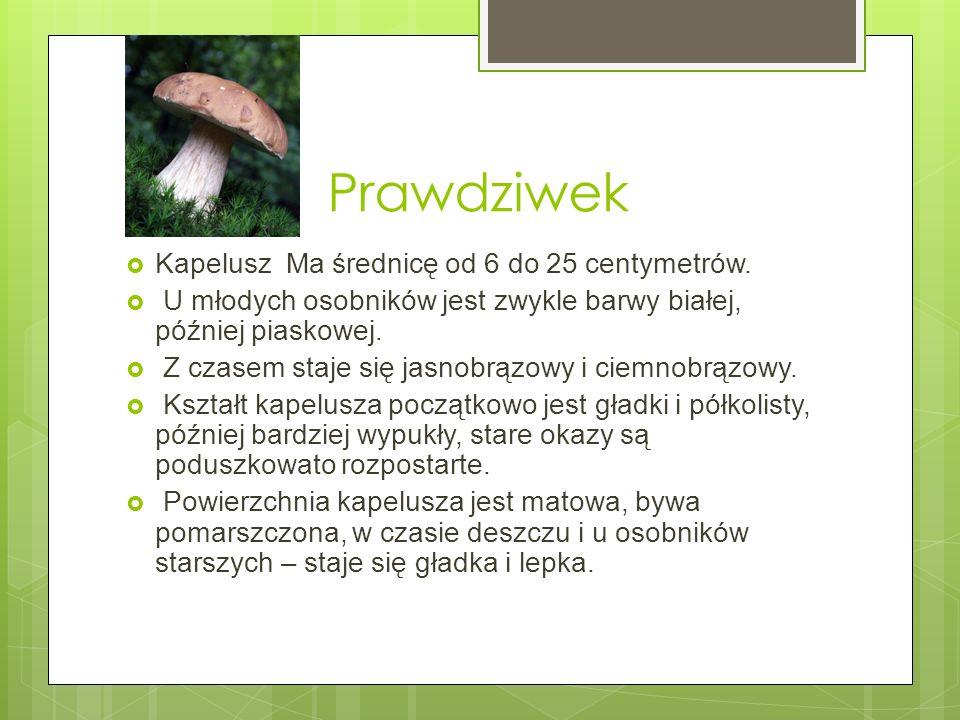 Prawdziwek Kapelusz Ma średnicę od 6 do 25 centymetrów. U młodych osobników jest zwykle barwy białej, później piaskowej. Z czasem staje się jasnobrązo