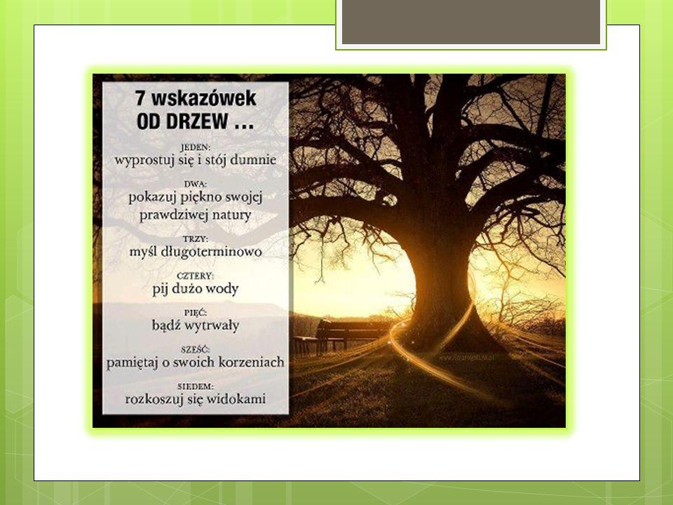 Przystanek 1 LIPA Lipo zielona, drzewo ojczyste, Co na mnie kwiaty strącasz złociste I cień daleki rzucasz dokoła, Drzewo rodzinne, ozdobo sioła.